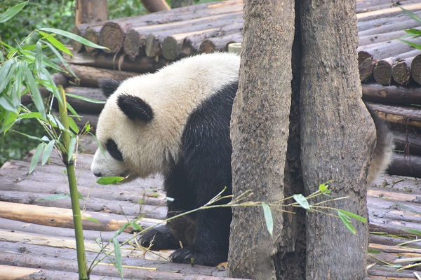NOT AVAILABLE:china_20141017_102239.JPG