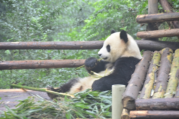 NOT AVAILABLE:china_20141017_102305.JPG