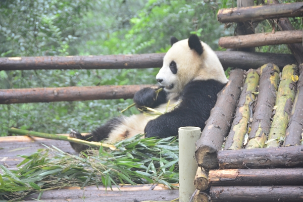 NOT AVAILABLE:china_20141017_102313.JPG